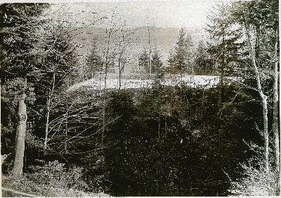 Burghügel Wolfensberg