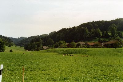 Juckern, Bodenwis, Blitterswil