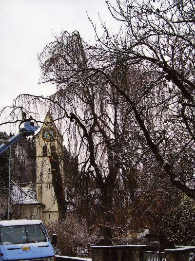 Reformierte Kirche: Baum-Fäll-Aktion