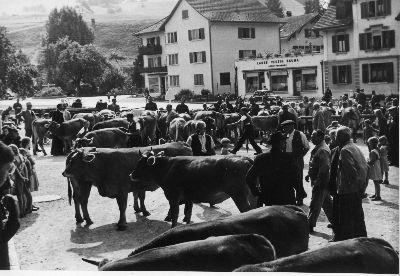 Viehschau Bauma