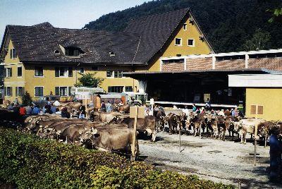 Viehschau Landiplatz Bauma
