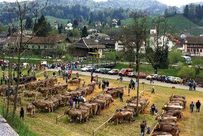 Viehschau mit Prämierung Sommerau Bauma