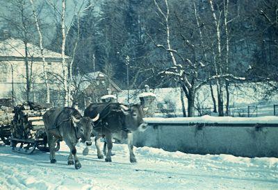 Holztransport im Winter im Grüntal