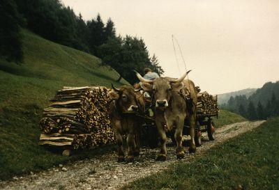 Holzbüdeli Transport in der Akau