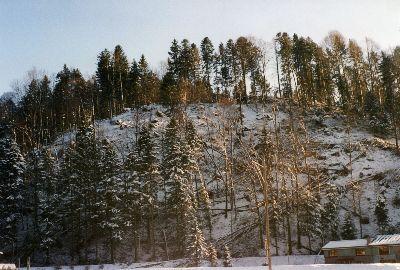 Lotharschäden im Brandholz