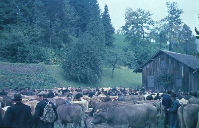 Viehmarkt</x> bei der <x>Schattenschür