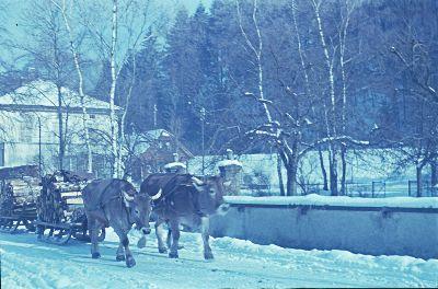 Holztransport</x> mit <x>Ochsenschlitten