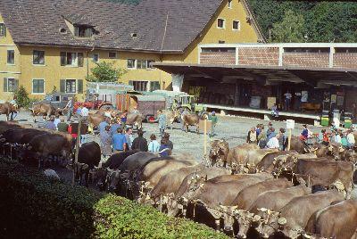 Viehmarkt hinter altem Landi